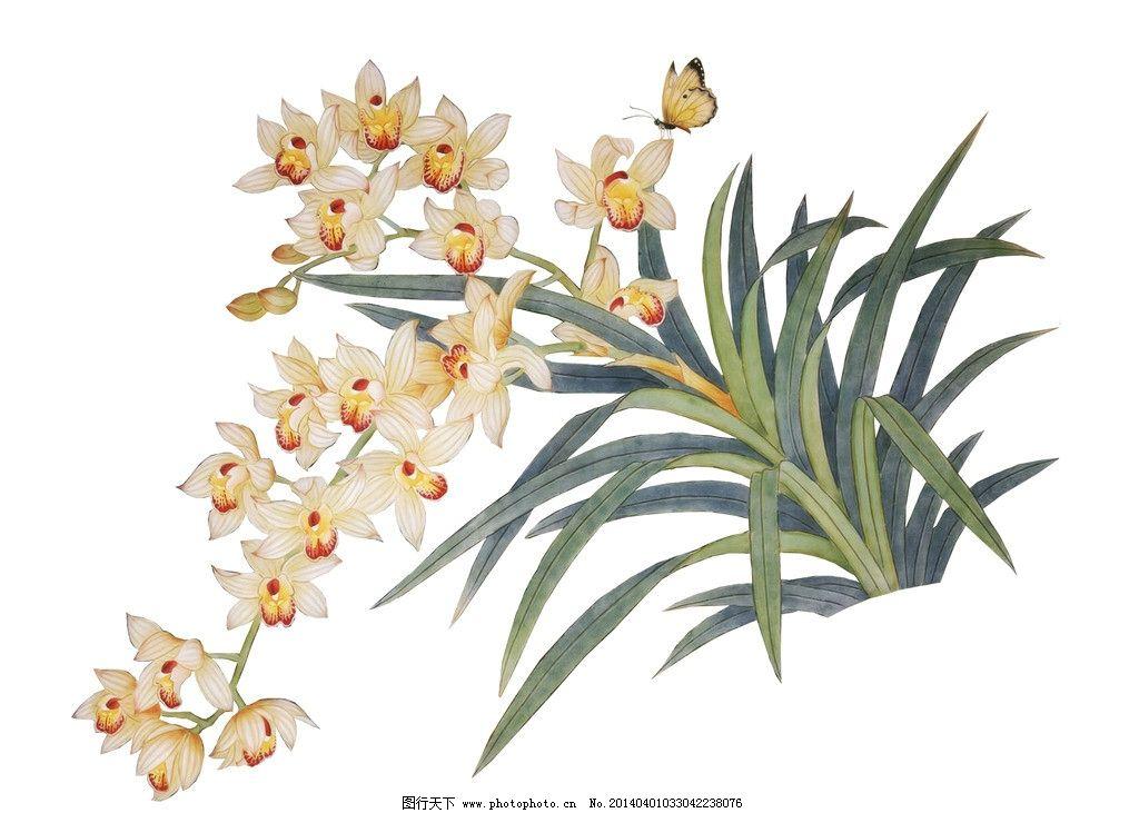兰花 手绘兰花 花卉 蝴蝶 鲜花 手绘花纹 精美花纹 兰花贴图 卡通