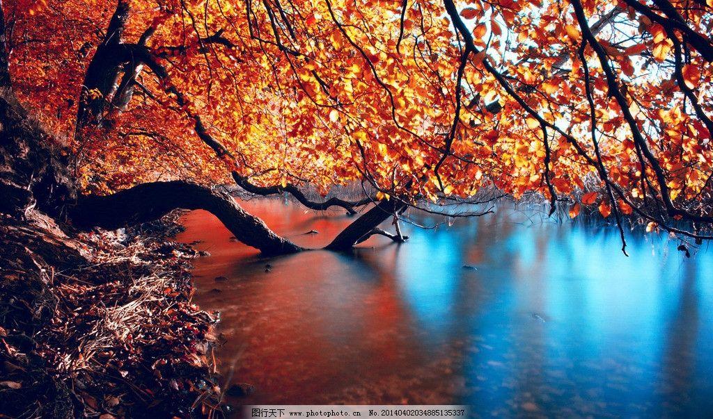 河流树木风景图片