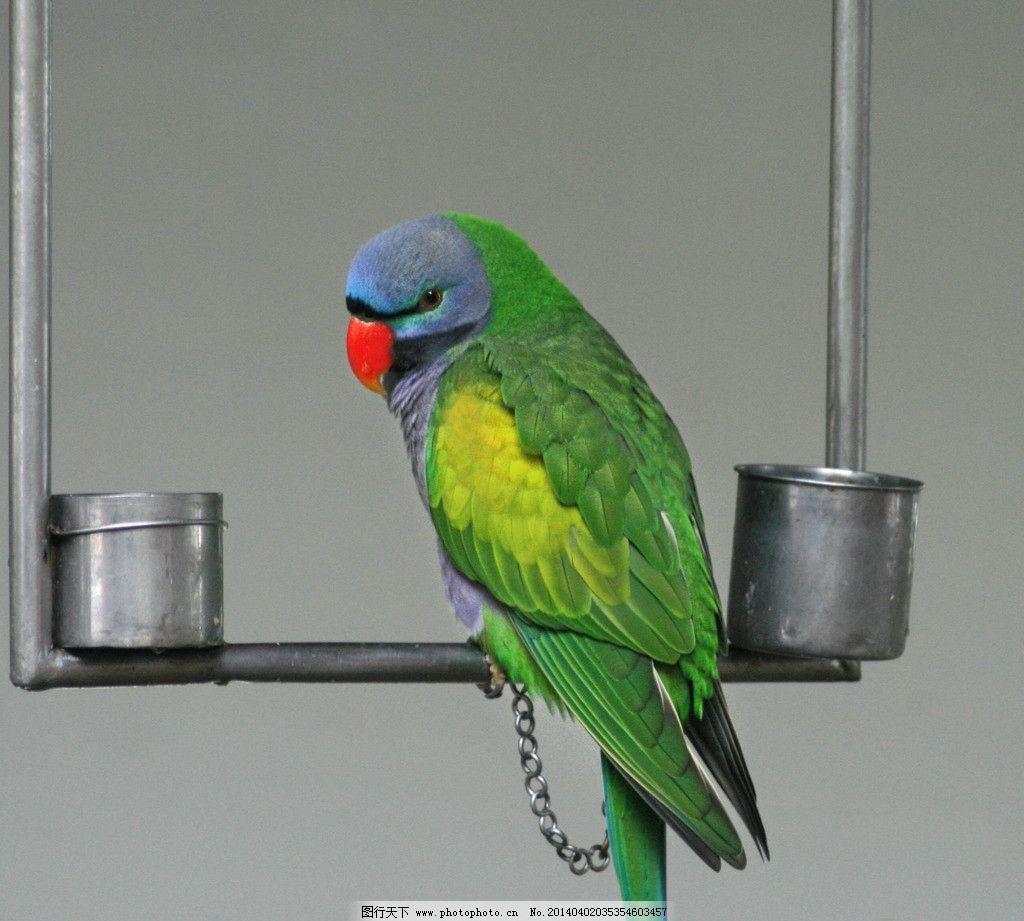 鹦鹉 鸟类 飞禽 动物 珍稀动物 鹦鹉学舌 稀有鸟 生物世界 摄影 350