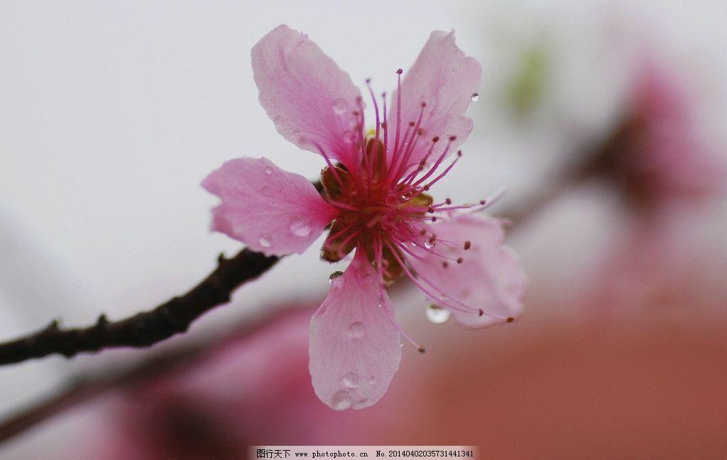 桃花朵朵 微距摄影 秋阳正午 动物世界 春天 鲜花摄影 花与草