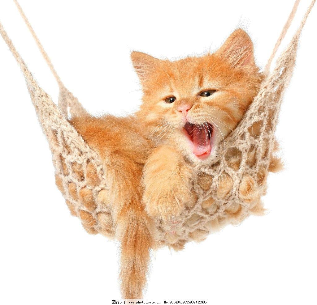 猫咪 可爱 萌猫 小猫 萌宠 可爱猫咪 吊床 花猫 宠物 动物 生物世界