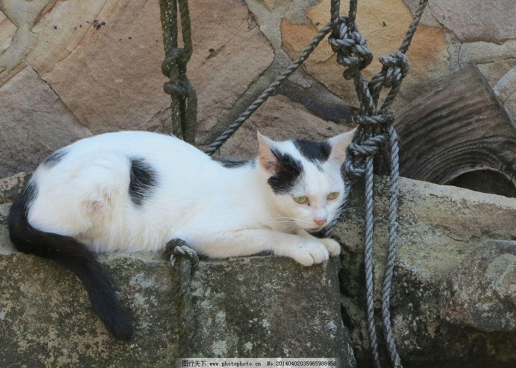 猫咪jpg 家畜 猫咪 动物 生物 可爱 睡觉 斑纹 喵 咪咪 动物大观 家禽