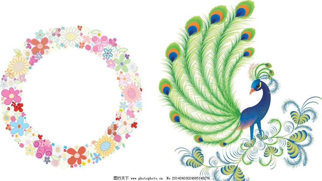 美丽 手绘鸟 孔雀开屏 手绘 鸟类 孔雀手绘 矢量素材 漂亮的孔雀 卡通