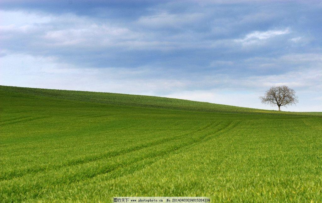 蓝天白云草地树木图片