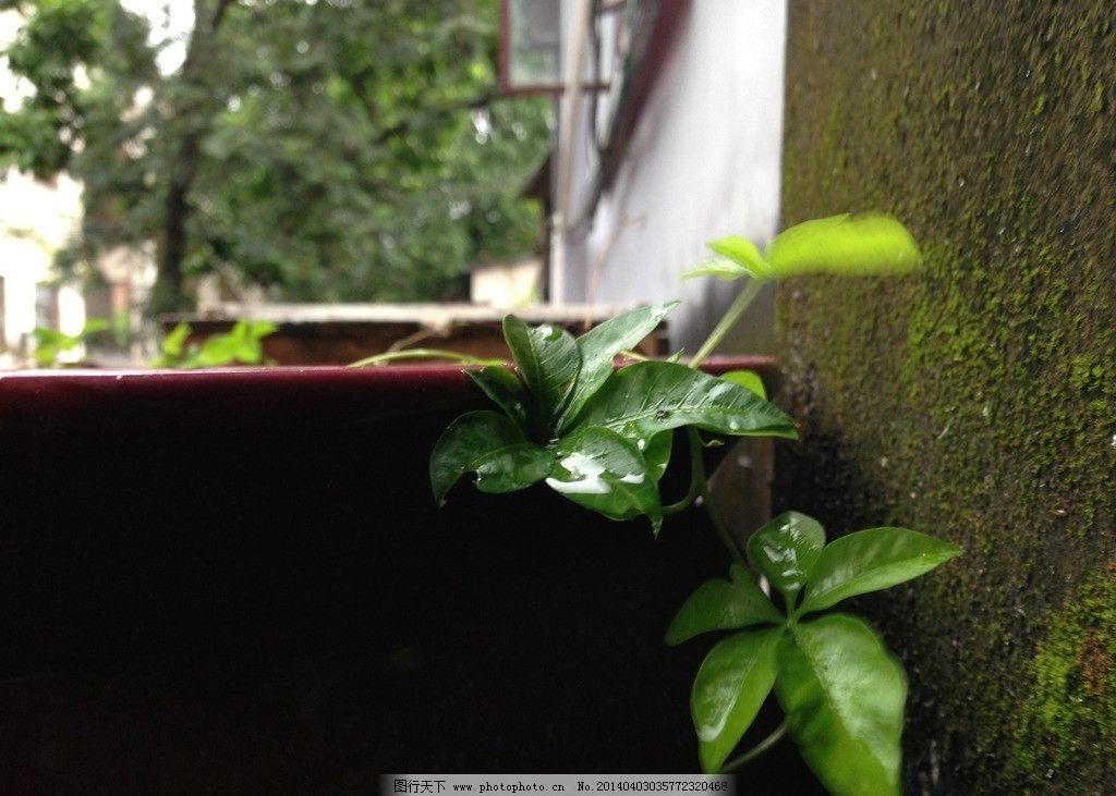 墙角植物图片