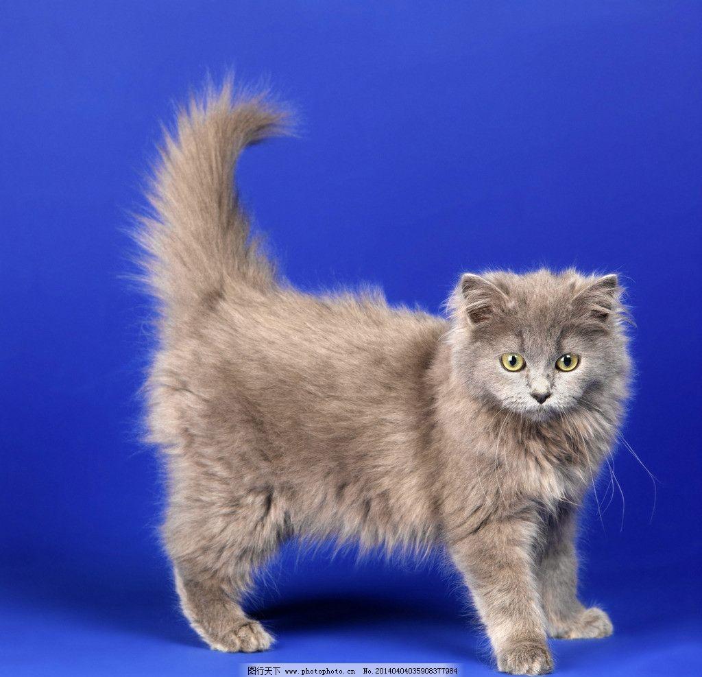 波斯猫 小花猫 猫咪 猫子 狸猫 野猫 家禽家畜 生物世界 摄影 300dpi