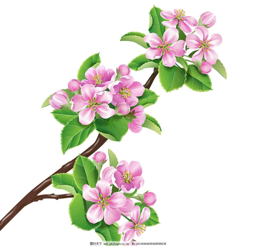 桃花 花草 花卉 绿叶 花瓣 樱花 手绘 春天 矢量 植物主题 生物世界