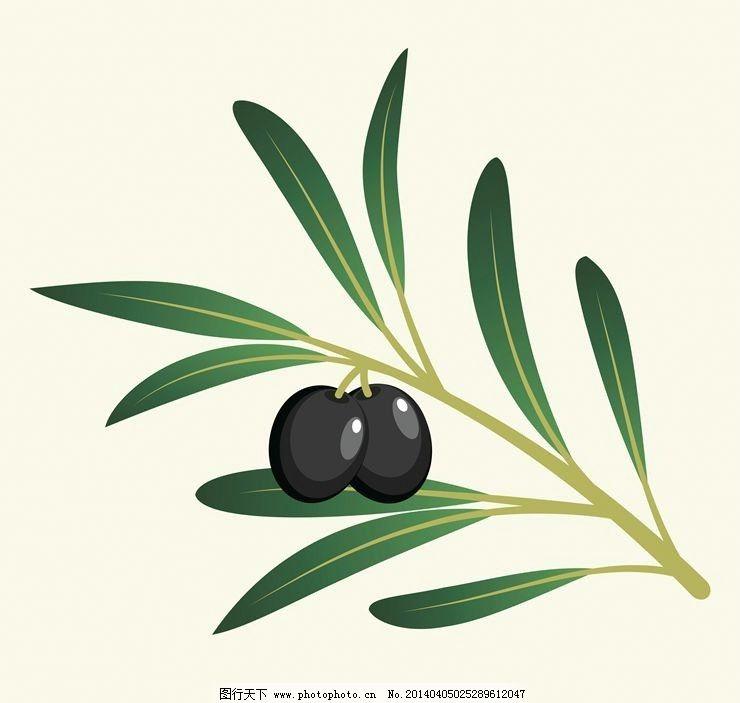 设计图库 生物世界 树木树叶  橄榄油橄榄树橄榄叶 橄榄 橄榄叶 橄榄