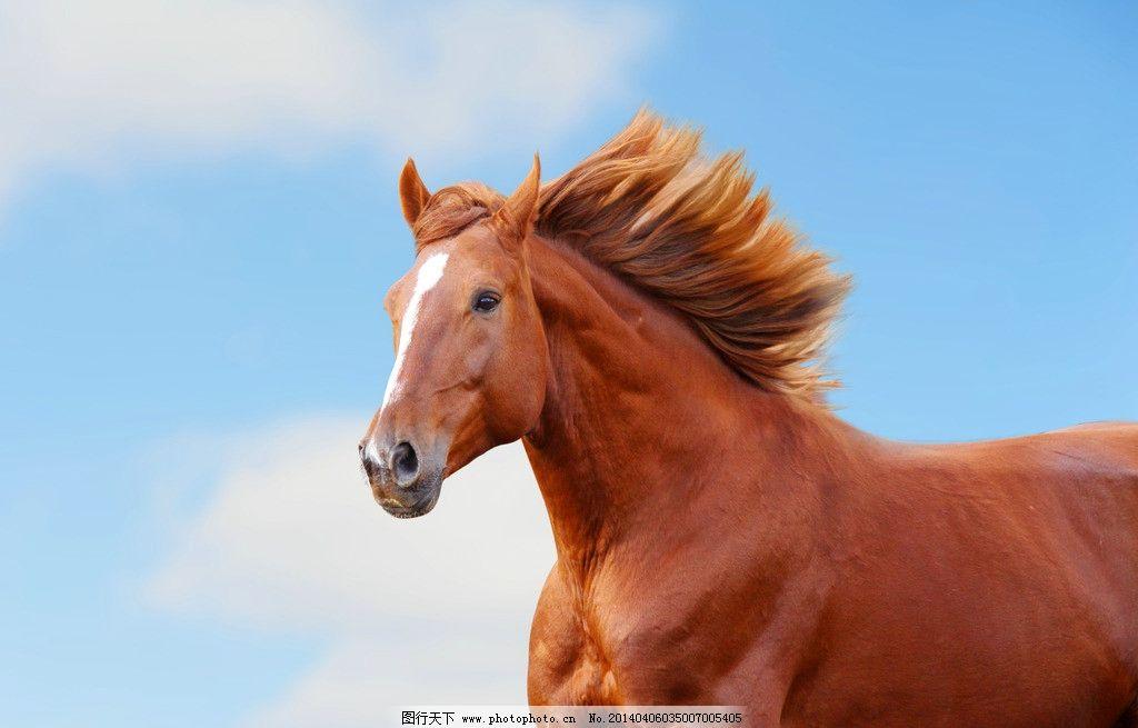 野马图片动物做微信头像