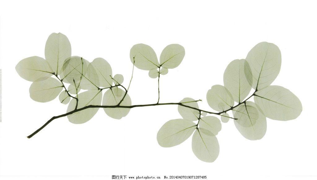 树叶 手绘图片