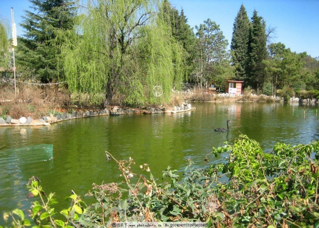 天鹅湖 动物园 野生动物 鸟类 池塘 树木 花草 景物 国内旅游 旅游