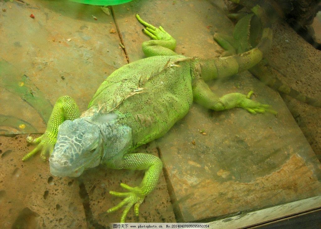 变色龙 动物园 野生动物 爬行动物 花草 生物世界 摄影