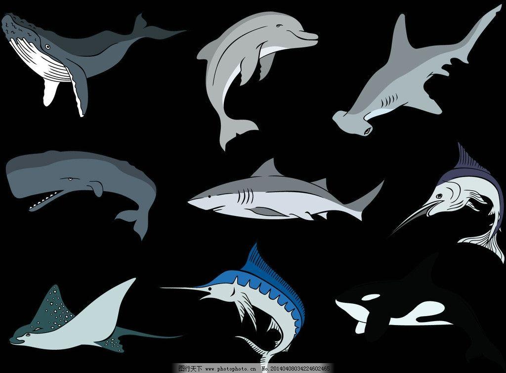 鲨鱼 野生 动物 海洋生物 鲸鱼 卡通鲨鱼 手绘 鱼类 野生动物