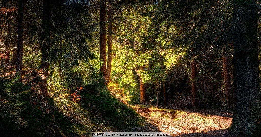 森林 国家地理 壁纸 高清 大自然 自然风景 自然景观 摄影