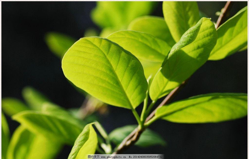 微距摄影 春天 树木树叶 生物世界 植物世界 风景 旅游 特写 秋阳正午