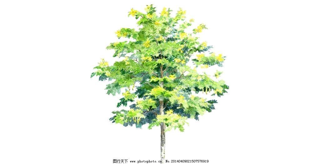 桦树 桑树 柏树 景观树 遮荫树 绿树 热带植物 木瓜树 槐树 树叶 树枝