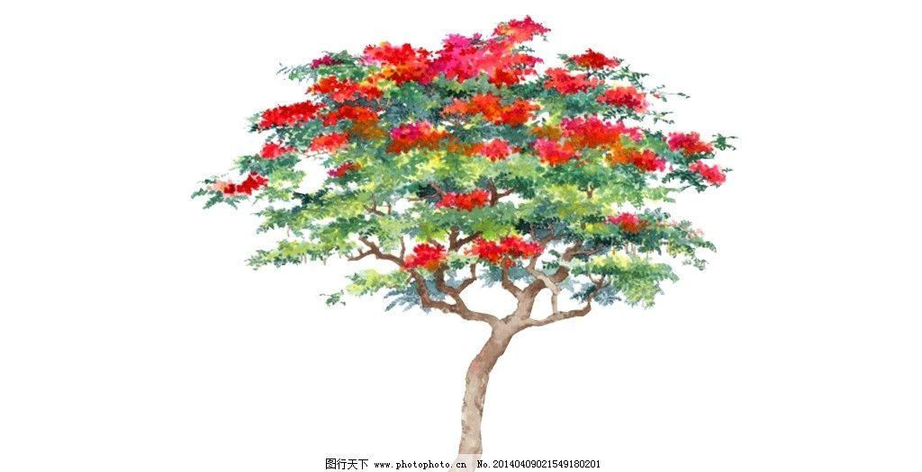 红花树图片