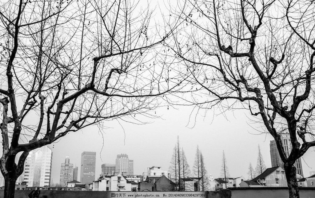 上海梧桐树图片