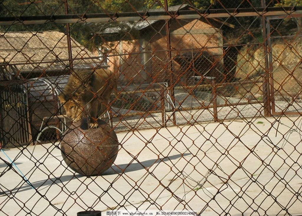 马戏团 动物园 表演 演出 房子 动物 演员 节目 野生动物 生物世界 摄