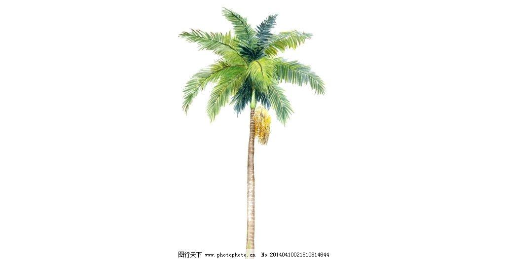 棕榈树图片_其他_3d设计