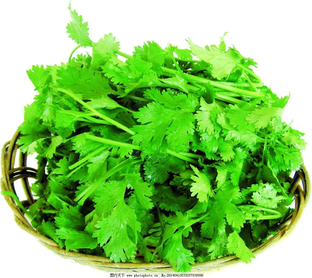 蔬菜免费下载 粮食 绿色 青菜 生物世界 水果 新鲜 有机 青菜图片素材