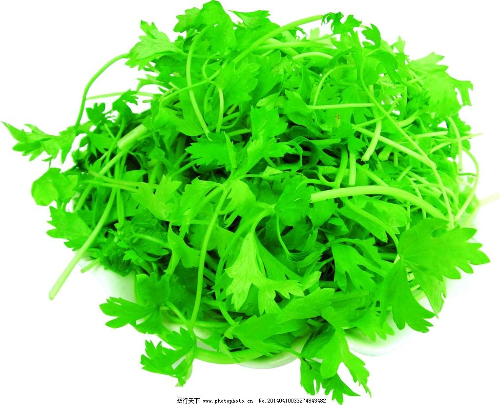青菜免费下载 粮食 绿色 生物世界 蔬菜 水果 新鲜 有机 菜图片素材