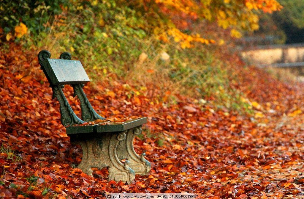 落叶 秋天 秋季 公园 黄叶 红叶 椅子 美丽 自然 美丽自然 自然风景