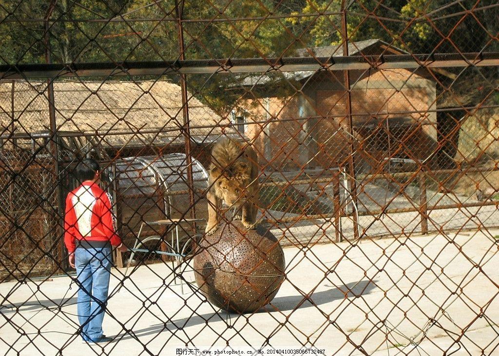 马戏团 表演 演出 杂技 动物 房子 野生动物 生物世界 摄影 180dpi