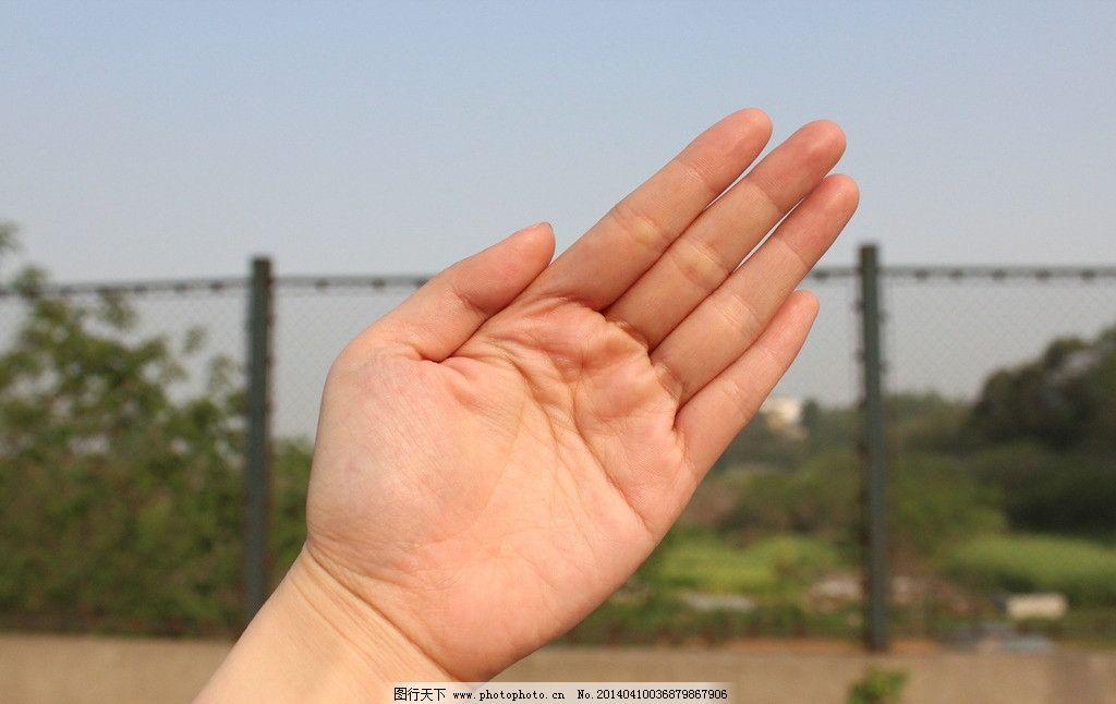 手势 手掌 向上 向左 向右 其他人物 人物图库 摄影 72dpi jpg