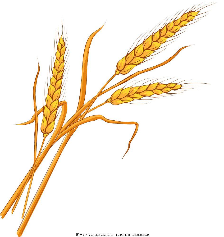 一粒麦子钢琴简谱图片