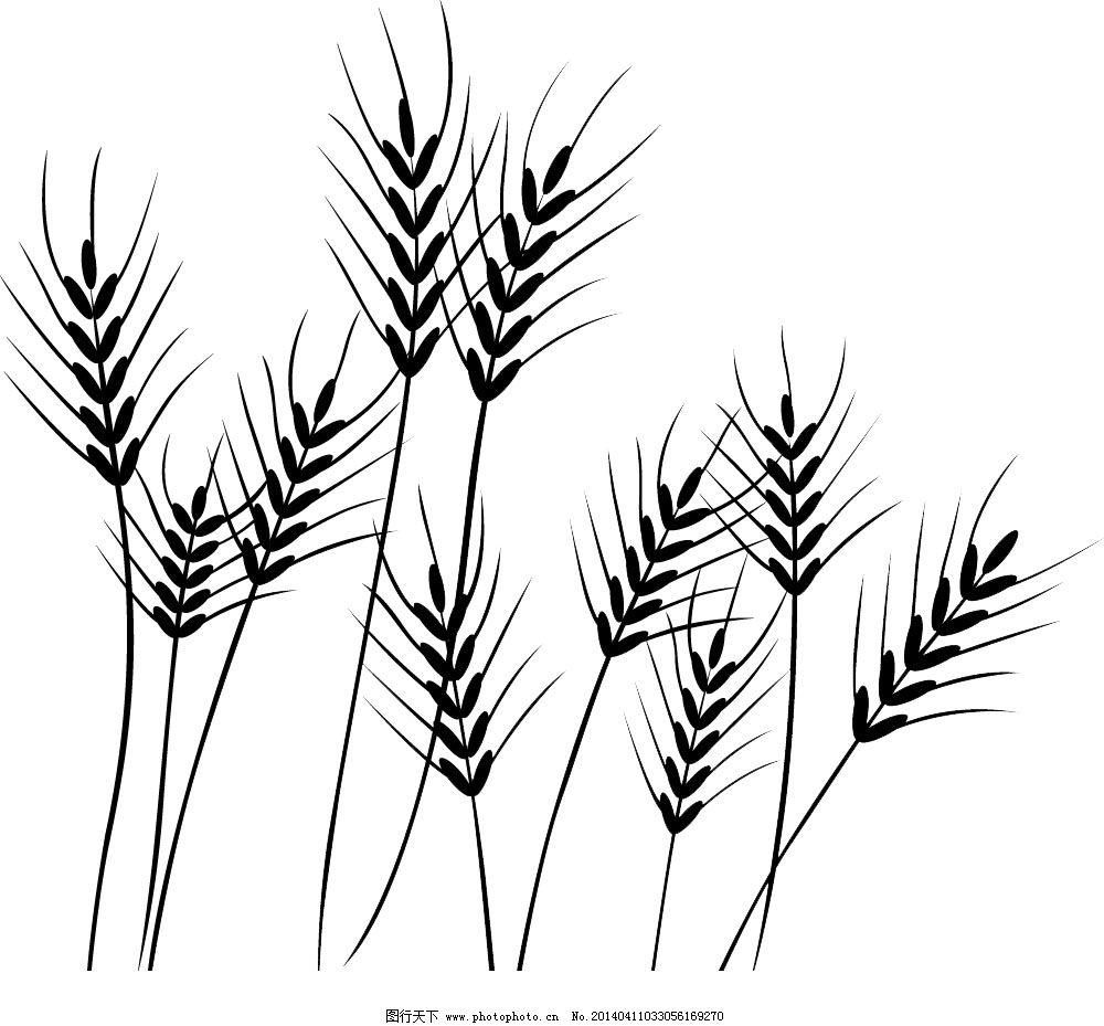 成熟麦子手绘图
