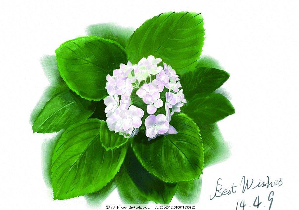 手绘 绣球花图片