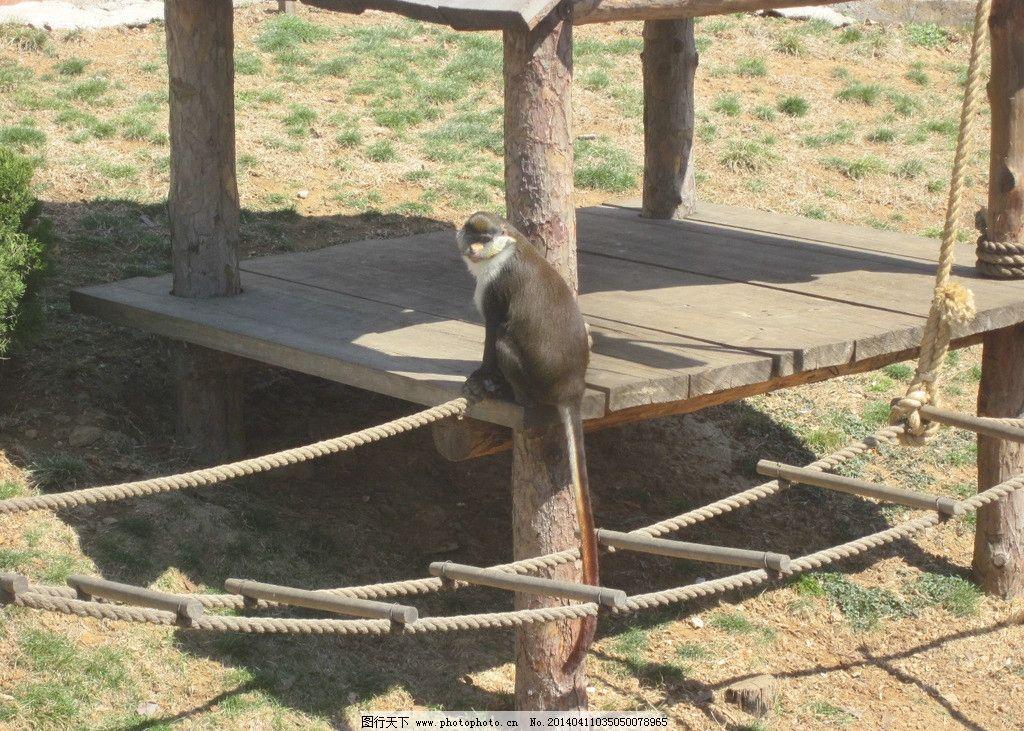 猴子 森林 动物园 人工 野生动物 生物世界 摄影 180dpi jpg