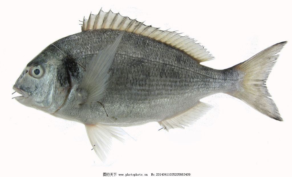 壁纸 动物 鱼 鱼类 1024_623
