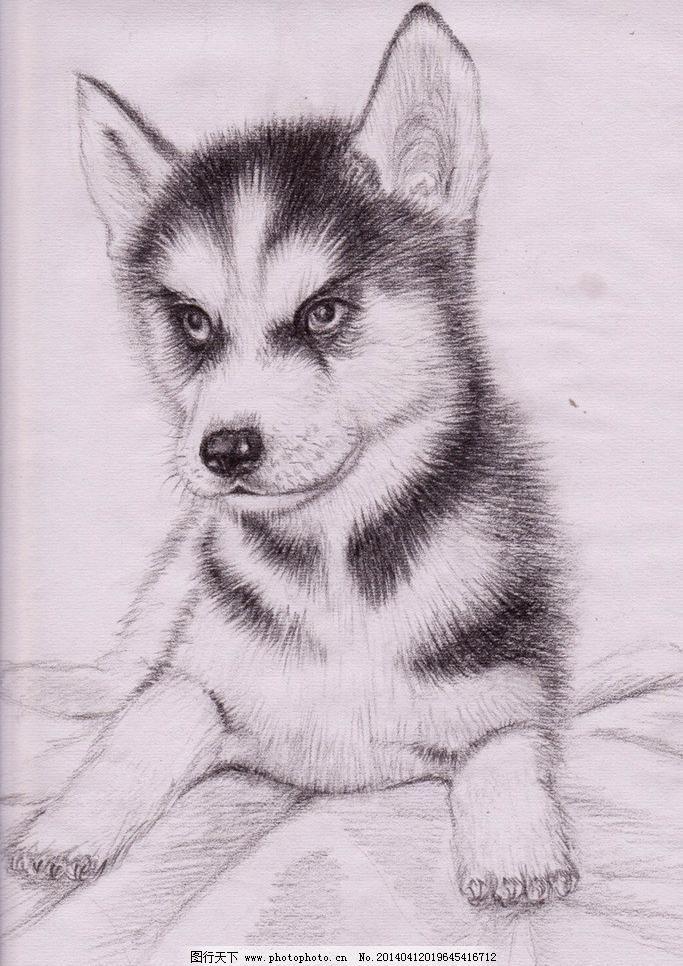可爱小动物素描图
