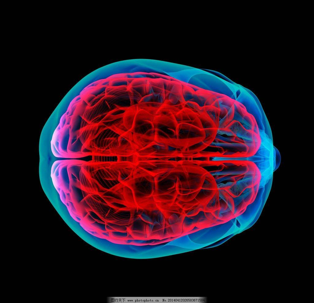 人脑结构大脑 人脑 大脑