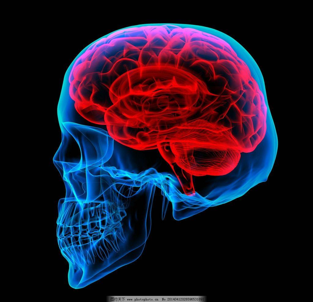 人脑大脑结构构造图片