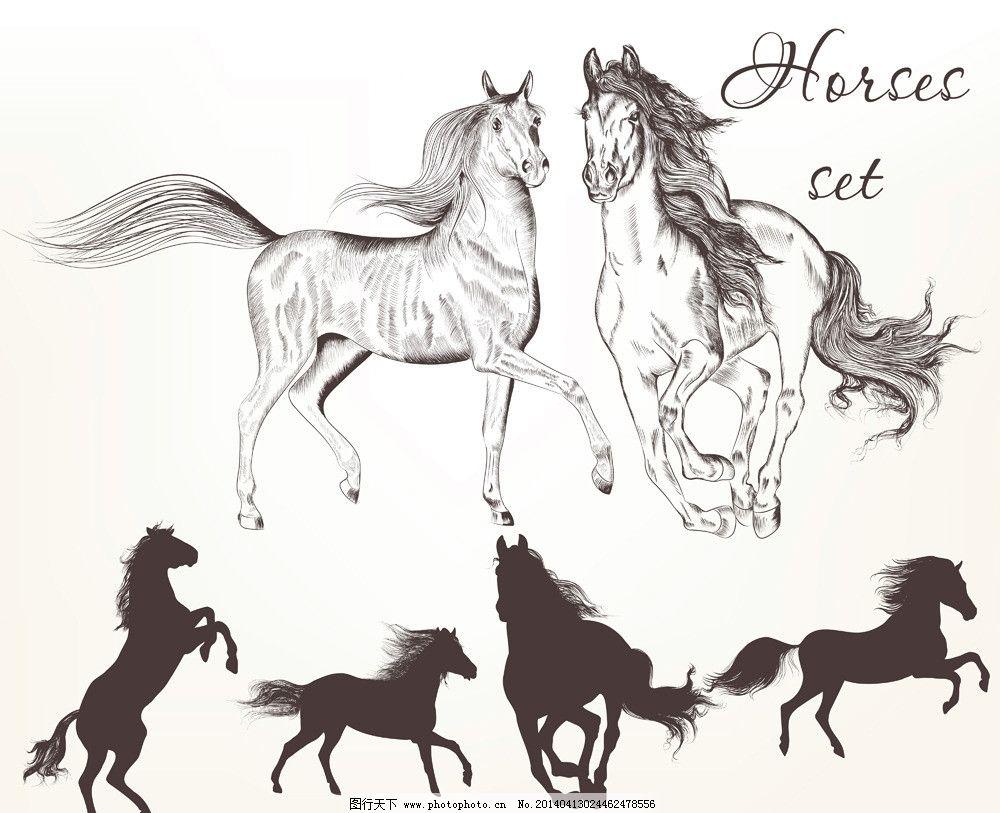 手绘马 手绘骏马 手绘素描动物 手绘 剪影 素描 复古 素描马 马 动物