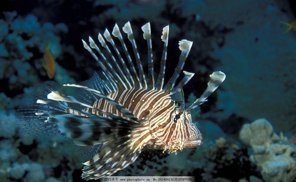 壁纸 动物 鱼 鱼类 1024_631