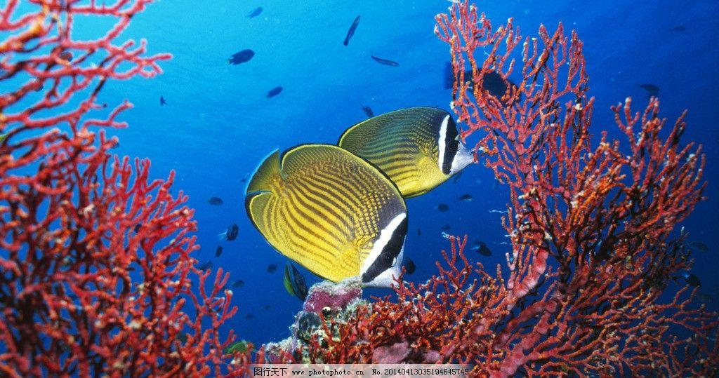 海洋生物 海底世界 高清海洋生物 海洋动物图片 深海生物素材 生物