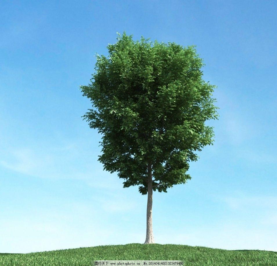 树木模型下载
