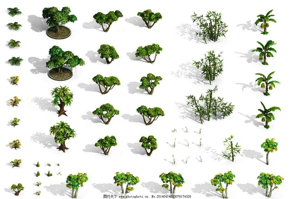热带树木竹子竹笋花图片