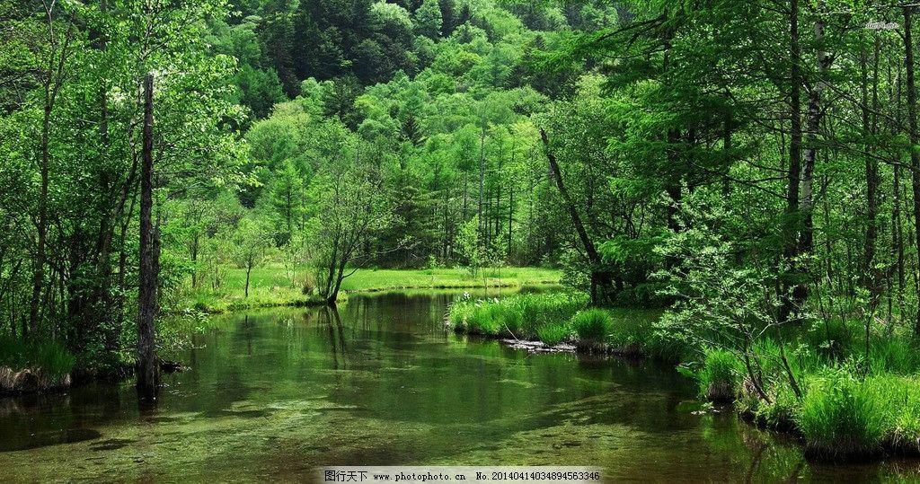 森林 湖 绿色 无人 清新 自然风景 自然景观 摄影