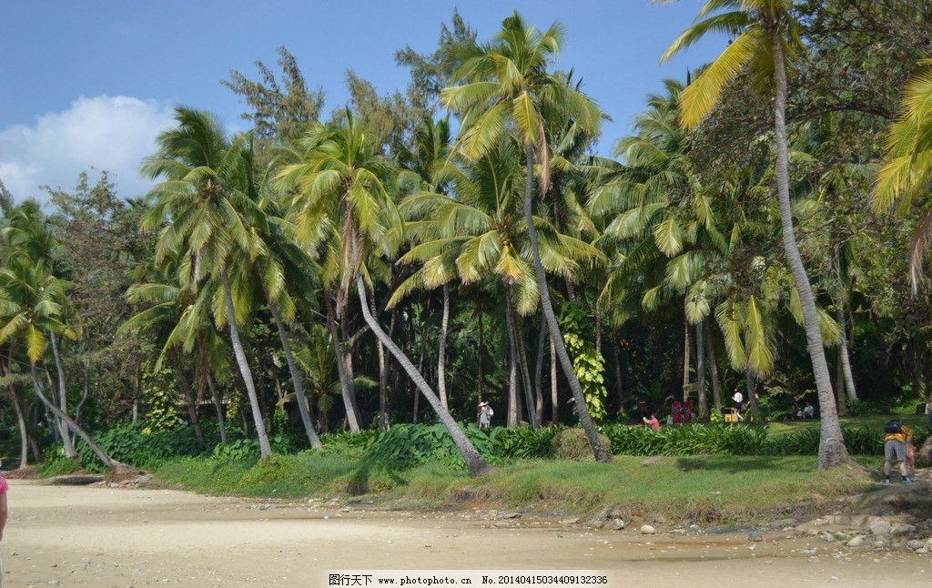 海南 海南风景 海南椰子树 海边 沙滩 海南风光 山水风景 自然景观