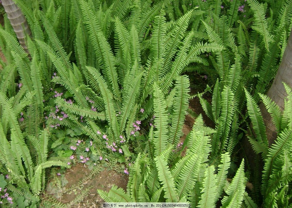 植物 石家庄 植物园 蕨类 热带 自然风景 自然景观 摄影 314dpi jpg