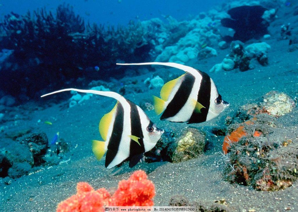 海底生物小制作