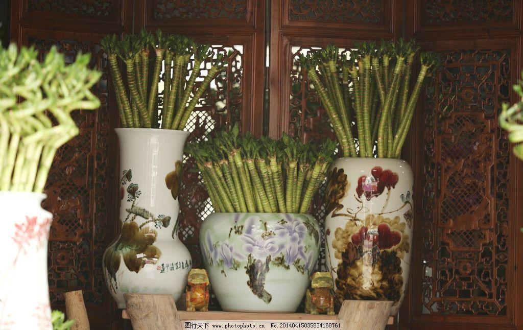 转运竹 绿色 富贵竹 瓷器 花瓶 高端 树木树叶 生物世界 摄影 72dpi