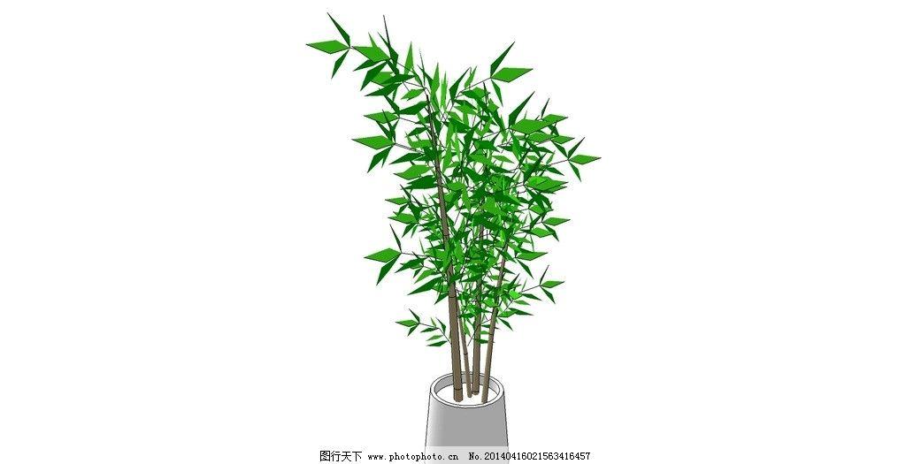 盆栽竹叶图片