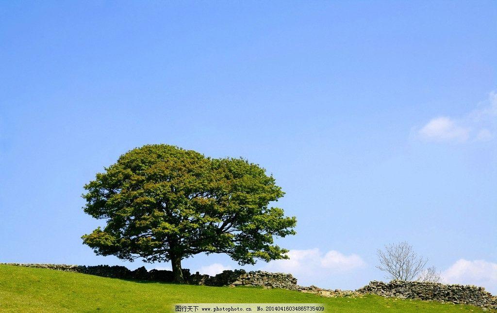 蓝天白云草地树木 蓝天 白云 草地 树木 自然风景 自然景观 摄影 72