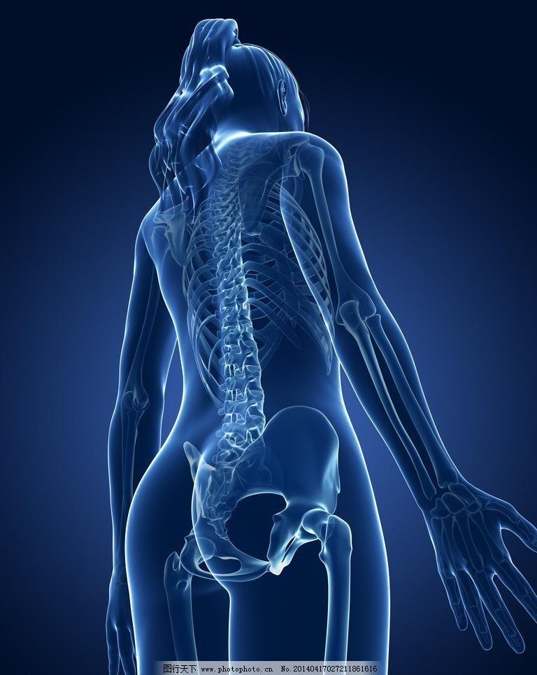 人体医疗透视图 人体 医疗 医学 女性 女人 背部 背面 身体 模型 3d模